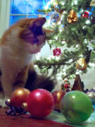 Anne Cameron Cutri - Kitty helps Decorate the Tree Christmas...