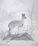 Habitat Drawings Posters - Klipspringer Poster by Julia Raddatz