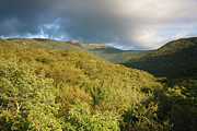 Lafayette Prints - Lafayette Brook Scenic Area - White Mountains New Hampshire USA Print by Erin Paul Donovan