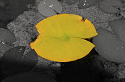 Donna Van Vlack - Leaf on a Pond II