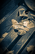 Silvia Ganora - Leaves on bench