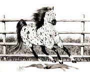 Horses Drawings - Leopard Appaloosa loping by Cheryl Poland