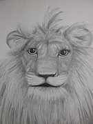 Lion Drawings Acrylic Prints - Lions Face Acrylic Print by Carol Frances Arthur