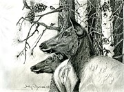 Elk Drawings - Listening to the Bugle by Judy Garrett