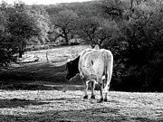Texas Longhorn Photos - Longhorns Long Day by Joe JAKE Pratt