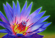 Buddhism Paintings - Lotus by Jurek Zamoyski