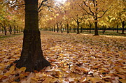 Where To Buy Magic Autumn Color On Canvas Posters - Magic Autumn Color Poster by Bruno Santoro