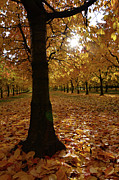 Where To Buy Magic Autumn Color On Canvas Posters - Magic Autumn Color1 Poster by Bruno Santoro
