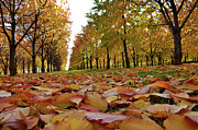 Where To Buy Magic Autumn Color On Canvas Posters - Magic Cherry Trees Poster by Bruno Santoro