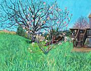 Sonoma County Painting Prints - Magnolia Blooming at the Farm Print by Asha Carolyn Young