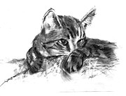 Cuddly Drawings Prints - Manny on Pillow Print by Marilyn Barton