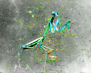 Sculpture Framed Prints - Mantis Framed Print by Arne Hansen