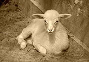 Suzanne Gaff - Marys Little Lamb... er Kid in sepia