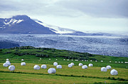 Paddocks Prints - Meadow with hay bales and glaciers near Jokulsarlon Lagoon in Iceland Print by Sami Sarkis