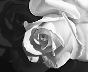 Jennie Marie Schell - Mirror Rose Flower Black and White