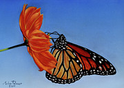 Insects Pastels Posters - Monarch Butterfly Poster by John  Palmer