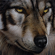 Wolves Metal Prints - Moon Wolf Metal Print by Jurek Zamoyski
