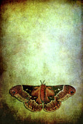 Sparse Art - Moth by Stephanie Frey