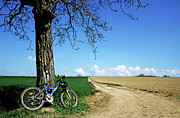 Dirt Roads Photos - Mountain bike under a tree beside dirt road by Sami Sarkis