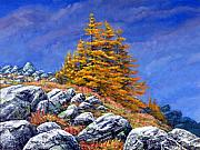 Featured Paintings - Mountain Tamaracks by Frank Wilson