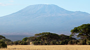 Mt. Kilimanjaro Art - Mt. Kilimanjaro by Robert Selin