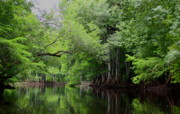 Barbara Bowen - Mystical Withlacoochee River