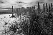 Thomas Schoeller - Nantucket Harbor Beach Dunes