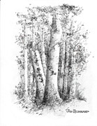 New Hampshire Drawings Posters - New Hampshire-White Birch Poster by Jim Hubbard