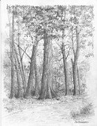 New Jersey Drawings - New Jersey-Red Oak by Jim Hubbard