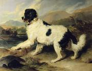 Sir Edwin Landseer - Newfoundland Dog Called Lion