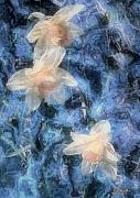 RC DeWinter - Nighttime Narcissus