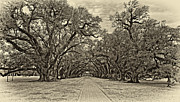 Steve Harrington - Oak Alley 3 antique sepia