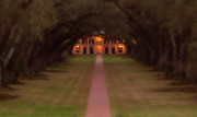 Oak Alley Plantation Photo Prints - Oak Alley Plantation Print by Jonas Wingfield