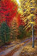 Autumn Leaves Metal Prints - October Road Metal Print by Frank Wilson