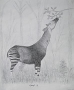 Exotic Drawings - Okapi by Julia Raddatz