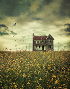 Sandra Cunningham - Old abandoned farmhouse in field of...