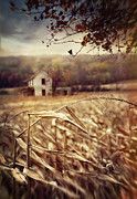 Sandra Cunningham - Old farmhouse in autumn corn fields