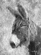 Donkey Digital Art Metal Prints - Old Hairy Donkey Metal Print by   DonaRose