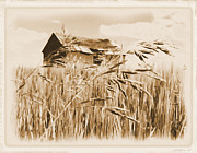 Old Barn Drawing Prints - Old Shanty on the Prairie os2 Print by Garry Staranchuk