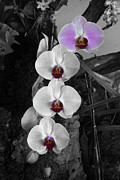 Extreme Floral Images - Orchid 4 by Kathy Dahmen