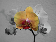 Extreme Floral Images - Orchid of Yellow by Kathy Dahmen