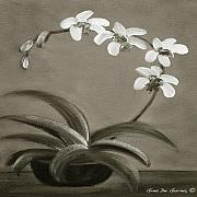 Gina De Gorna - Orchids in Black and White
