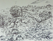 Wyoming Drawings - Our Back Yard by Dawn Senior-Trask
