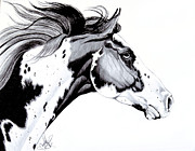 Drawing Of A Horse Head Framed Prints - Overo Paint Horse Framed Print by Cheryl Poland