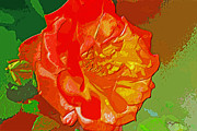 Barry Jones - Painted Rose