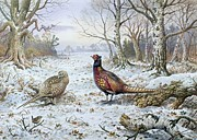 Carl Donner - Pair of Pheasants with a Wren