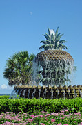 Suzanne Gaff - Palmetto Fountain