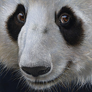 Wildlife Art Painting Originals - Panda Bear by Jurek Zamoyski