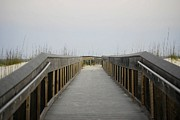 Judy Hall-Folde - Panhandle Beach Path