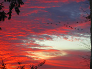 Kym Backland - Papaya Colored Sunset with Geese
